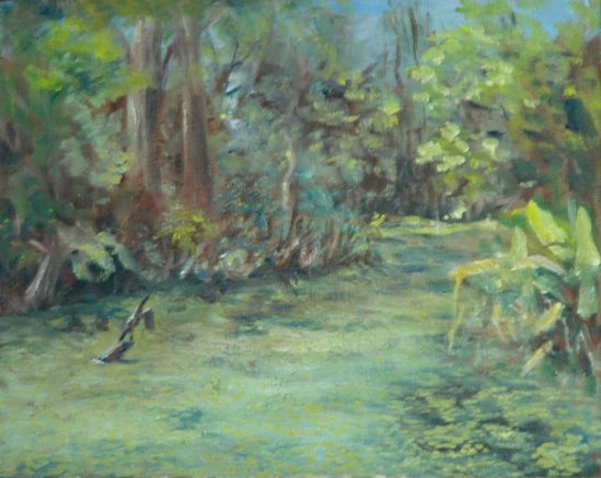 Corkscrew Swamp -- the Anhinga airing his/her wings
