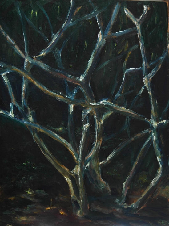 Frangepani Tree