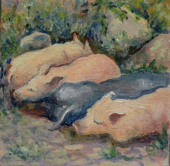 Four little piggies napping