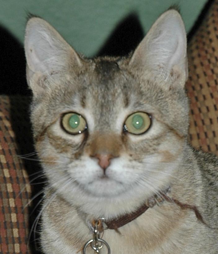 Freckles as kitten